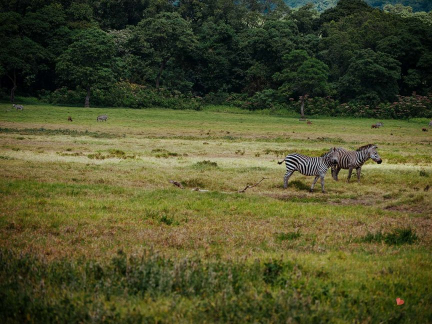 Safari in Tansania