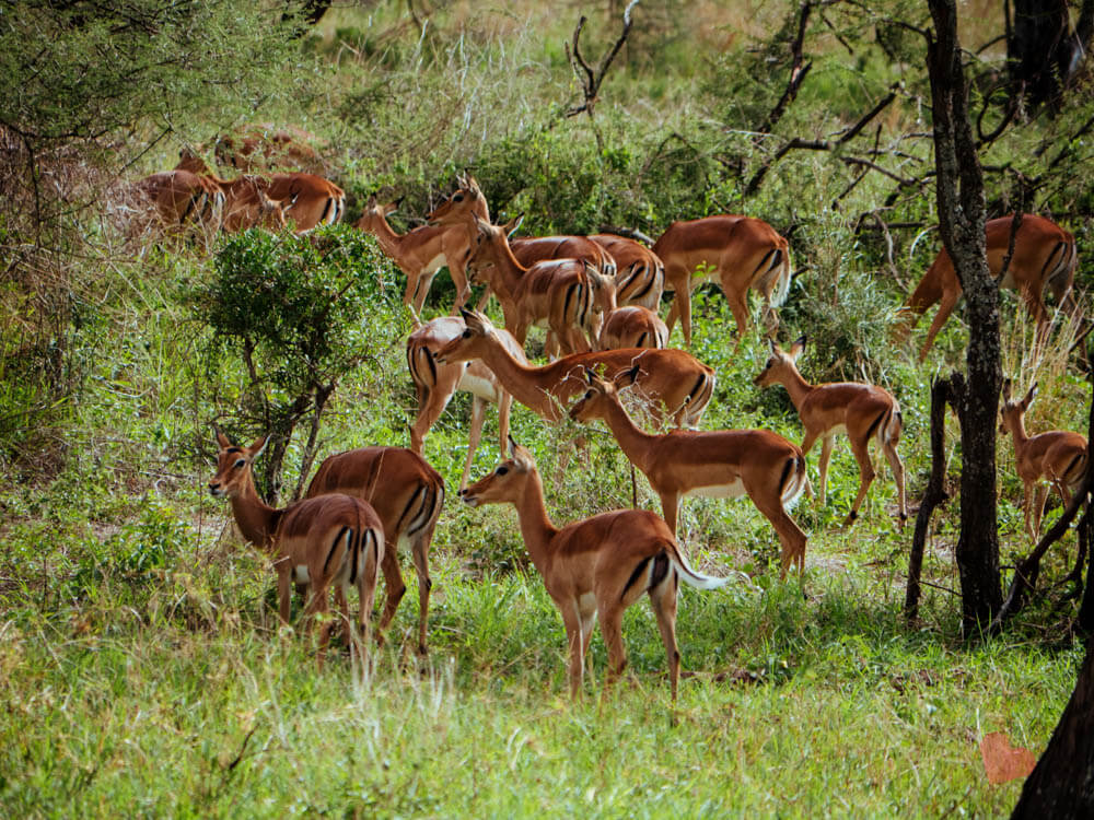 Safari in Tansania