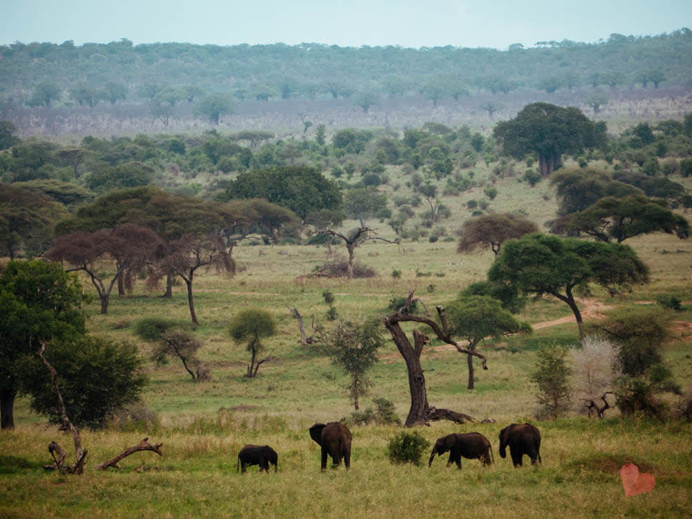 Safari im Tansania