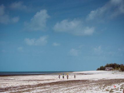Seegras am Strand von michamvi kae
