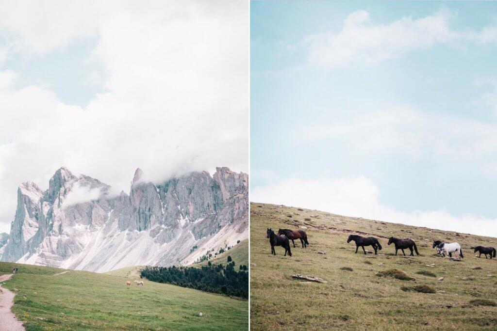Urlaub in den Dolomiten - Wanderung Raschötz - Puez-Geisler - Blick auf Seceda mit Pferden