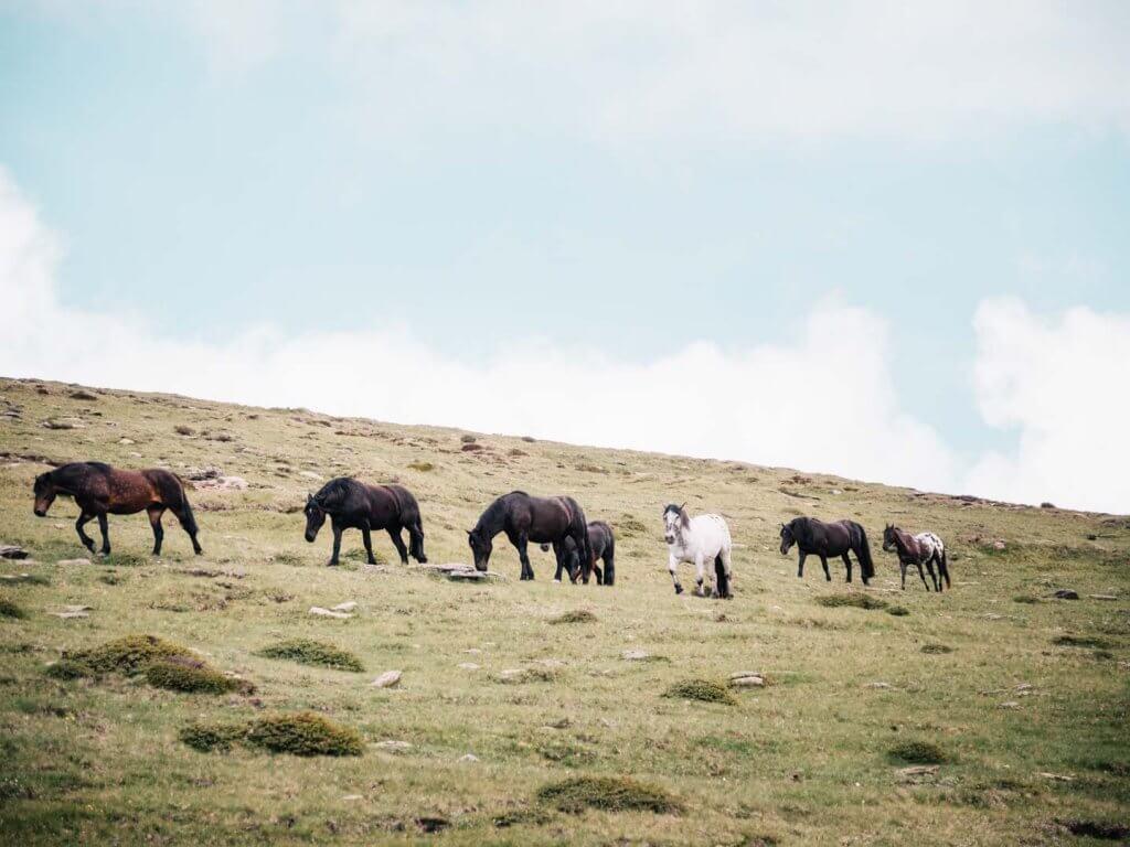 Urlaub in den Dolomiten - Wanderung Resciesia - Puez-Geisler - Pferde